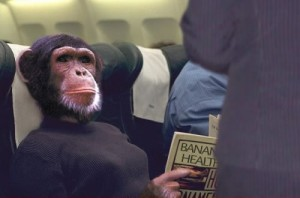 chimpanzee acting like airline passenger